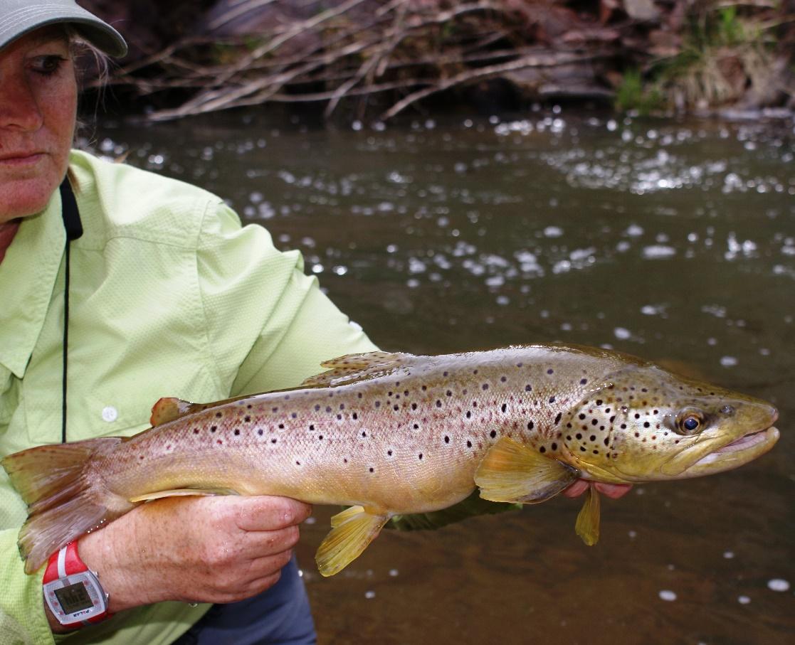 Small stream fishing in arizona royal humpy fly fishing for Fishing in az